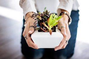 dísznövény webáruház